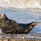 Seal 2 by Ellesscee