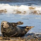 Seal 3 by Ellesscee