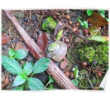 Jungle Shell Poster