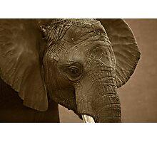 Elephant Youth Photographic Print