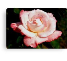 Dewy pink rose Canvas Print