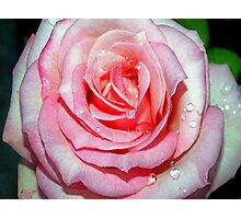 Drops on a pink beauty Photographic Print