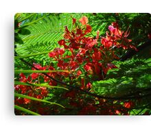 colors of the tropical zone I - colores de zona tropical Canvas Print