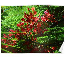 colors of the tropical zone I - colores de zona tropical Poster