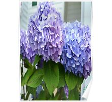 blue & purple flowers Poster