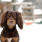 Snow pup by playwell