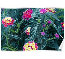 Wild Flowers - Electric Blue Poster