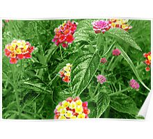Wild Flowers - Green Poster