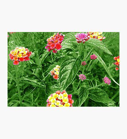 Wild Flowers - Green Photographic Print
