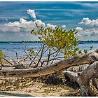 Tree on the Beach by Edvin  Milkunic