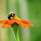 Flower and bee by Alberto  DeJesus