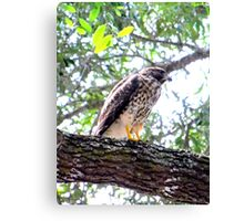 The Falcons Perch Canvas Print