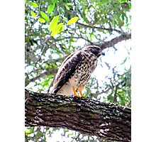 The Falcons Perch Photographic Print