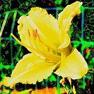 Blown Hibiscus by Adam Kuehl