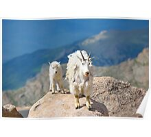 Mother and Baby Goat Poster