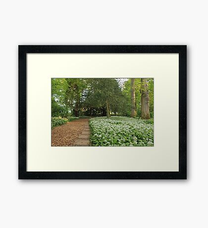 Spring Forest Path Cumbria Framed Print