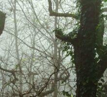 Winter tree silhouette in great fog, nature concept Sticker
