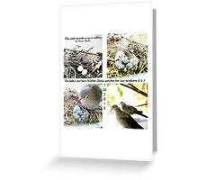 Dove lays eggs Greeting Card