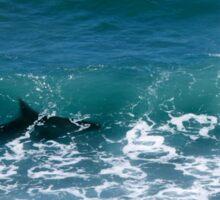Shark Surf Sticker