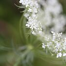 Simple Cow Parsley by decorartuk