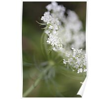 Simple Cow Parsley Poster