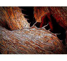 Impression of a Desert Landscape Photographic Print