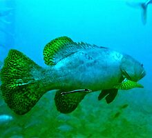 THE GROPED GROUPER! by NICK COBURN PHILLIPS