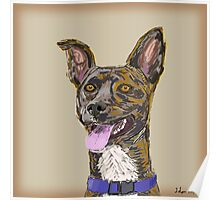 Funny Colorful Sketched Dog with Big Ears Poster