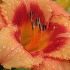Tropical Daylily by Lynn Gedeon