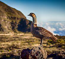 Hawaiian Nene Goose by NealStudios