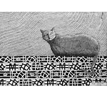 245 - CAT ON A PATCHWORK WALL - DAVE EDWARDS - INK - 2013 Photographic Print