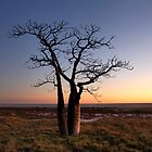 Boab Tree @ Derby WA by Mark Ingram Photography