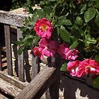 Come Sit and Enjoy the Roses by Lucinda Walter