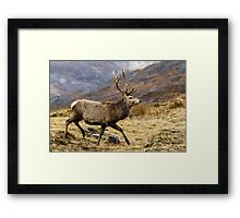 Red Deer Stag Running Framed Print