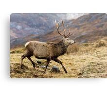 Red Deer Stag Running Metal Print