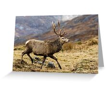Red Deer Stag Running Greeting Card