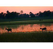 A Delta sunset Photographic Print