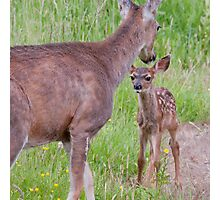 Curious Baby......Protective Mother Photographic Print