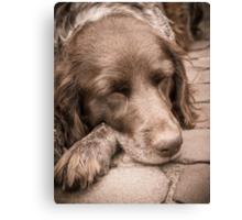 Shishka-Dog Sleeps Canvas Print