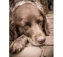 Shishka-Dog Sleeps Photographic Print