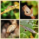 Caterpillar Collage by Eve Parry