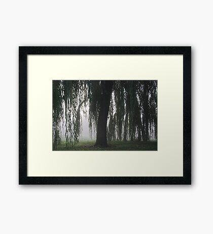 Foggy Willow Framed Print