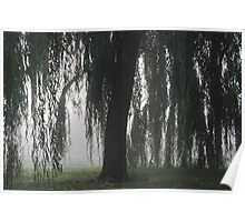 Foggy Willow Poster