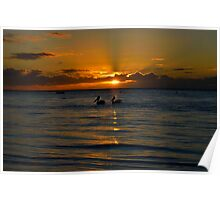 Pelican Sunset. Poster