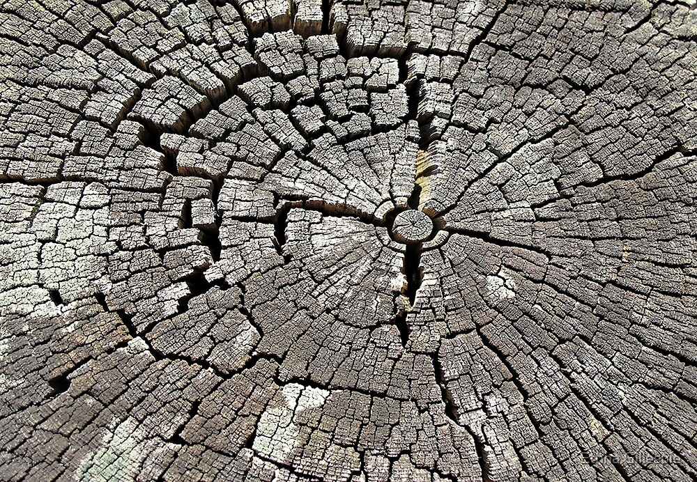 Crumbling Stump  by Ethna Gillespie