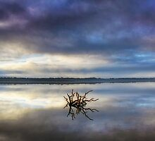 Serenity on Leschenault by Adam Brice
