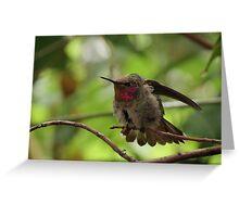 Anna's Hummingbird (Juvenile)~ Morning Stretch Greeting Card