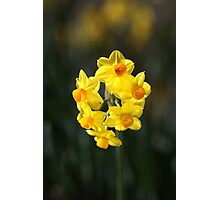 Jonquil Cluster Photographic Print