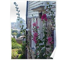 Hollyhocks By English Cottage Poster