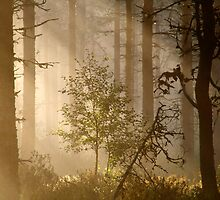 3.8.2013: Morning in the Forest III by Petri Volanen